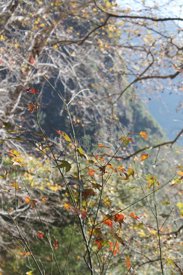 在台湾的秋天季节 库存图片