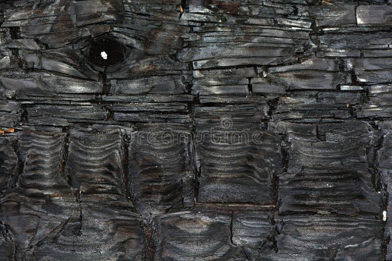 在台湾的被烧焦的Cedarwood木头纹理 免版税库存图片