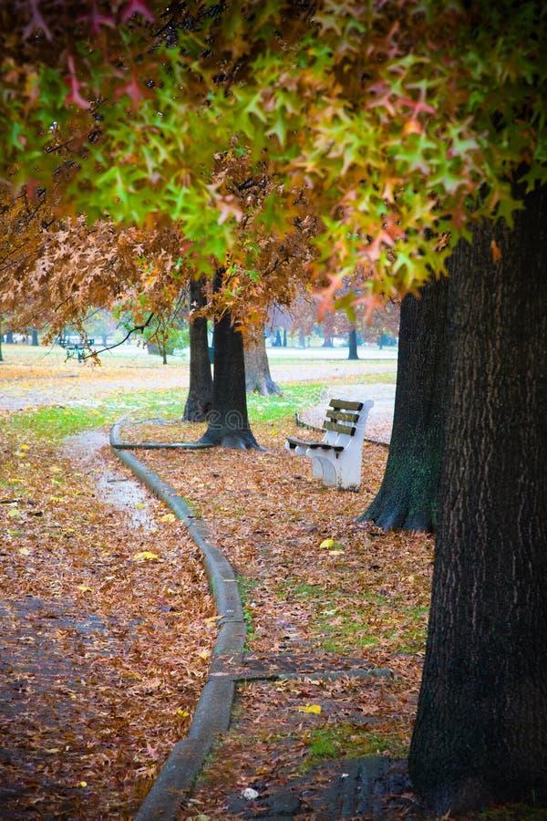 在叶子之中的长凳 免版税库存照片