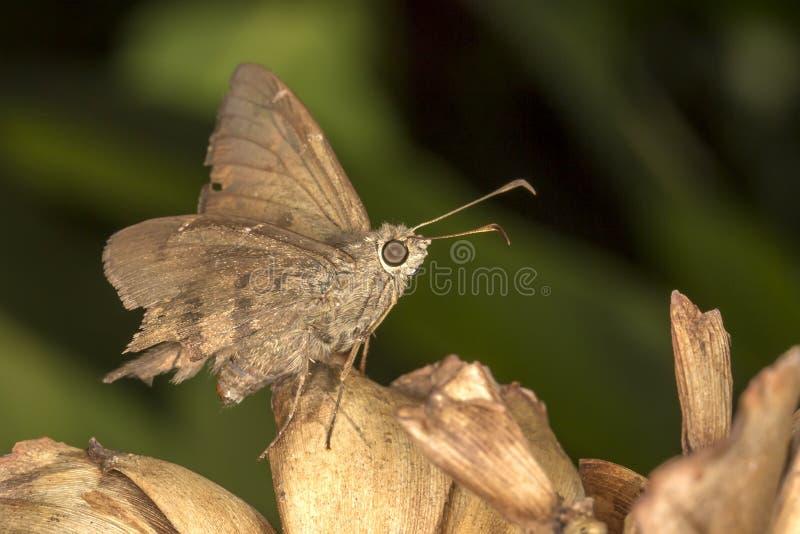在叶子关闭的蝴蝶侧视图 免版税库存照片