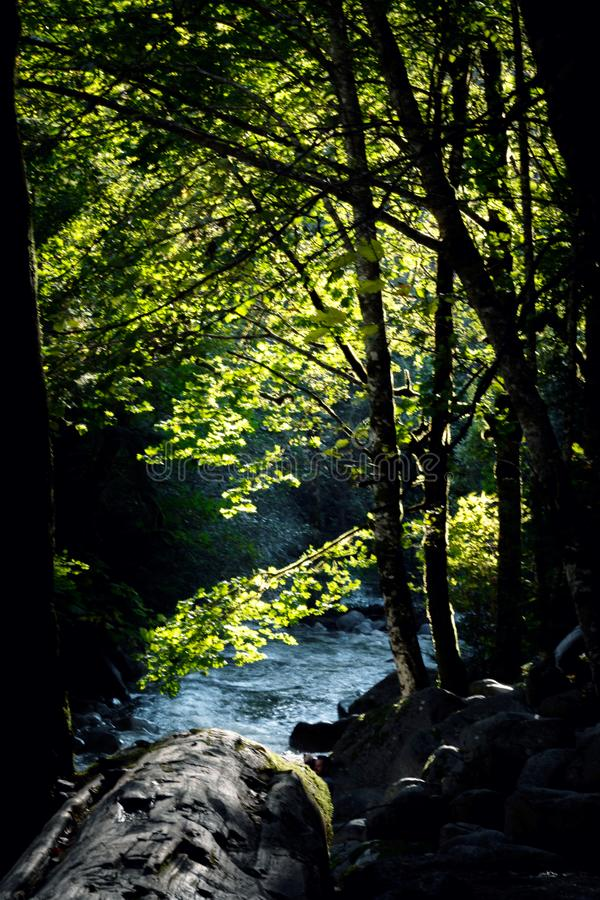 在叶子和小河的太阳光 免版税库存图片