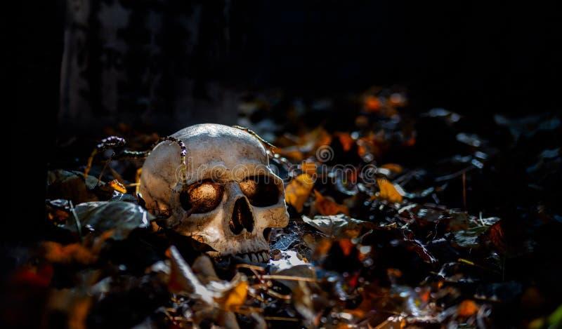 在叶子围拢的地面上的头骨 免版税库存照片