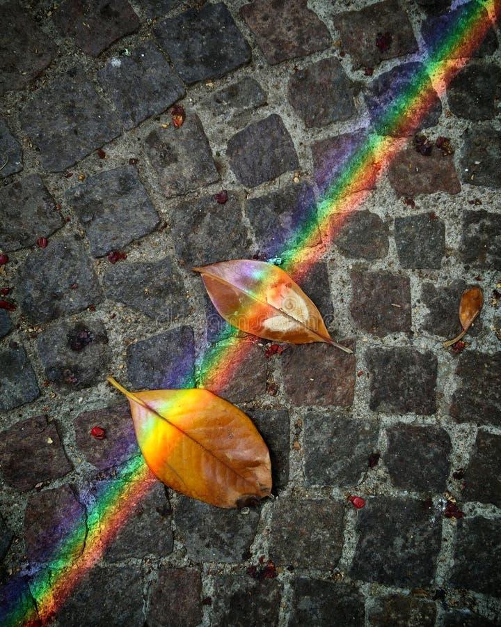 在叶子的光反射 库存图片