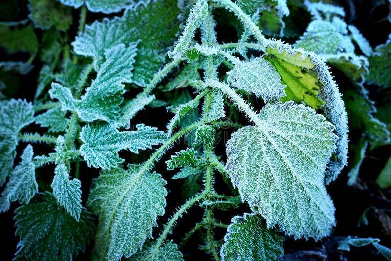 在叶子的冰 库存照片