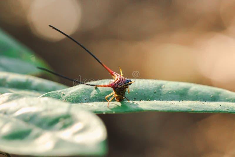 在叶子的弯曲的多刺的蜘蛛 库存图片