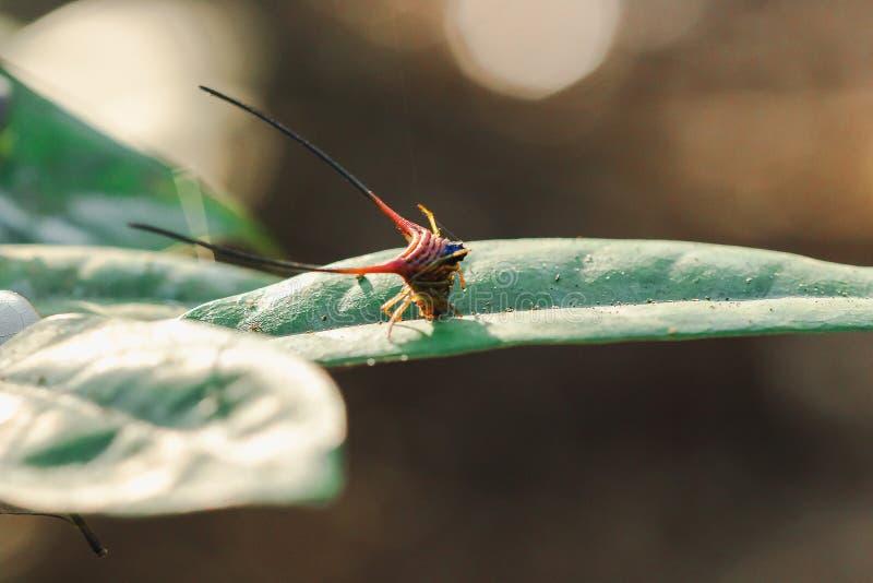在叶子的弯曲的多刺的蜘蛛 免版税库存图片