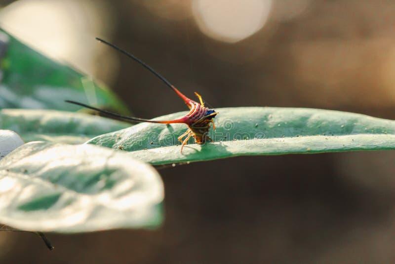在叶子的弯曲的多刺的蜘蛛 图库摄影