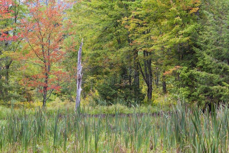 在叶子的早秋天颜色在新英格兰森林里 库存图片