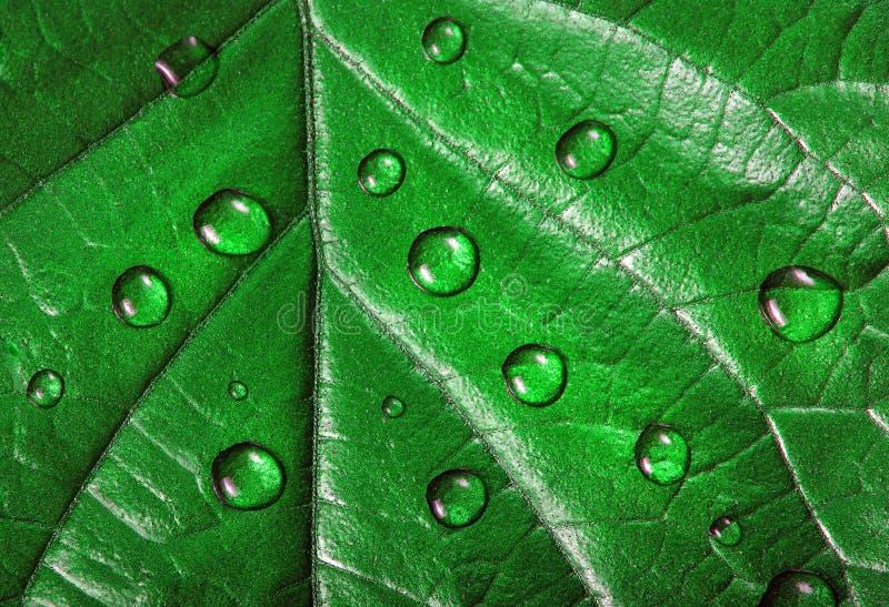 在叶子的水滴 在下落特写镜头的绿色叶子 免版税库存照片