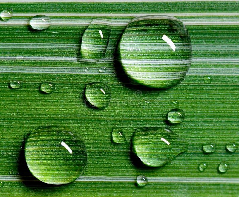 在叶子的特写镜头大美丽的雨珠 免版税库存照片