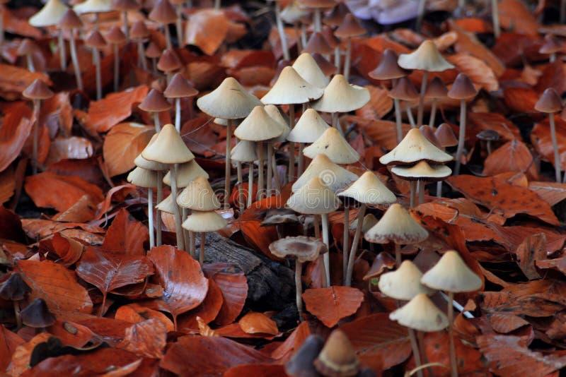 在叶子的真菌 图库摄影