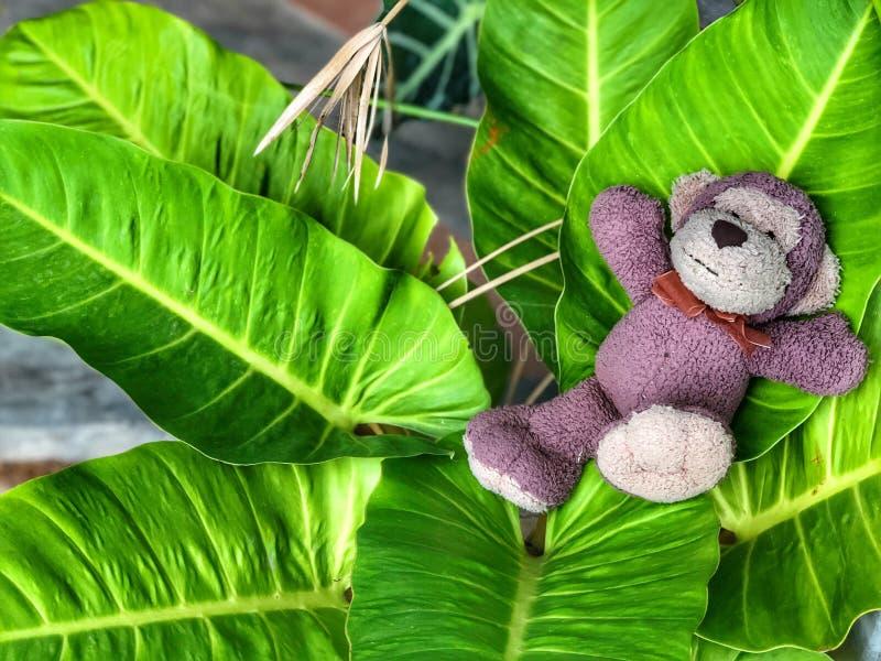 在叶子的逗人喜爱的猴子微笑玩偶睡眠有绿色背景 库存照片