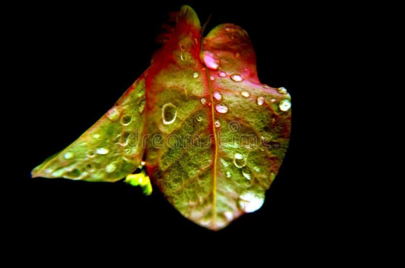 在叶子的雨下落 抽象本质 被美化的自然 被赞美的自然 免版税库存照片