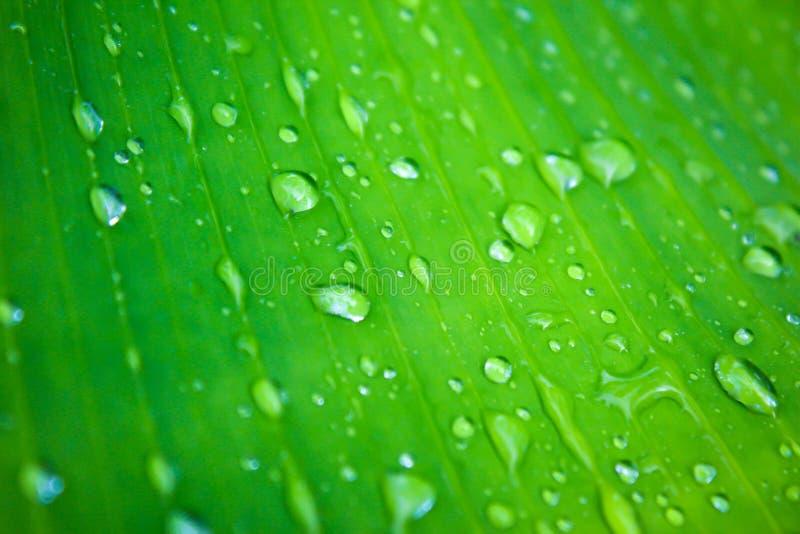 在叶子的水 免版税库存照片