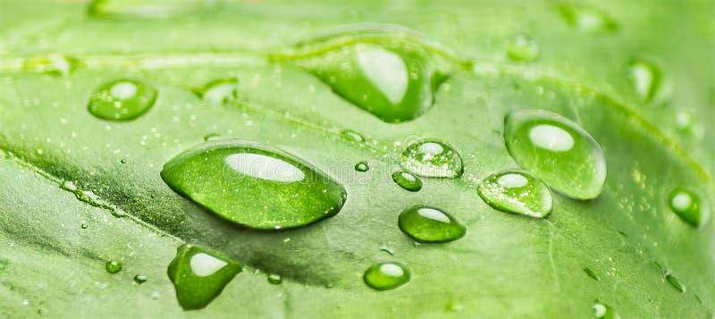 在叶子,有许多水下落的绿色叶子的水下落 库存照片
