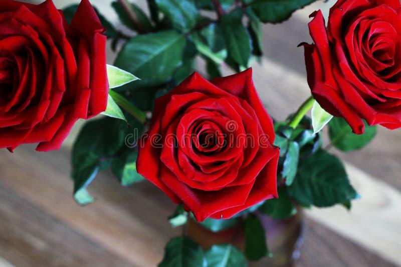 在叶子Blured背景的红色红宝石玫瑰束 免版税库存图片