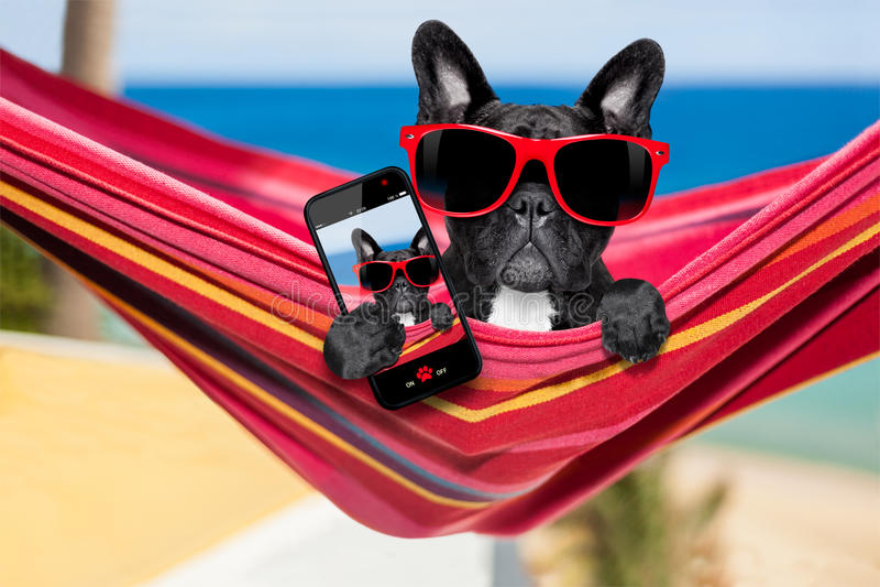 在吊床的狗在夏天 免版税库存图片