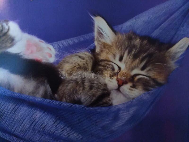 在吊床的猫 免版税库存照片