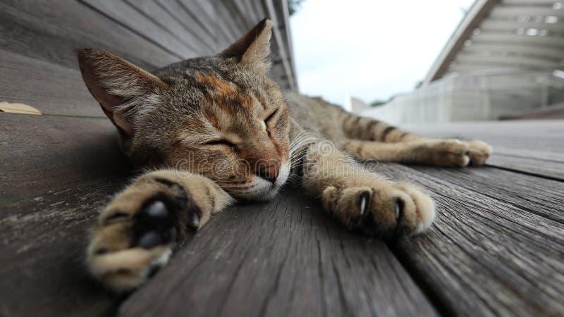 在吊桥的猫 图库摄影