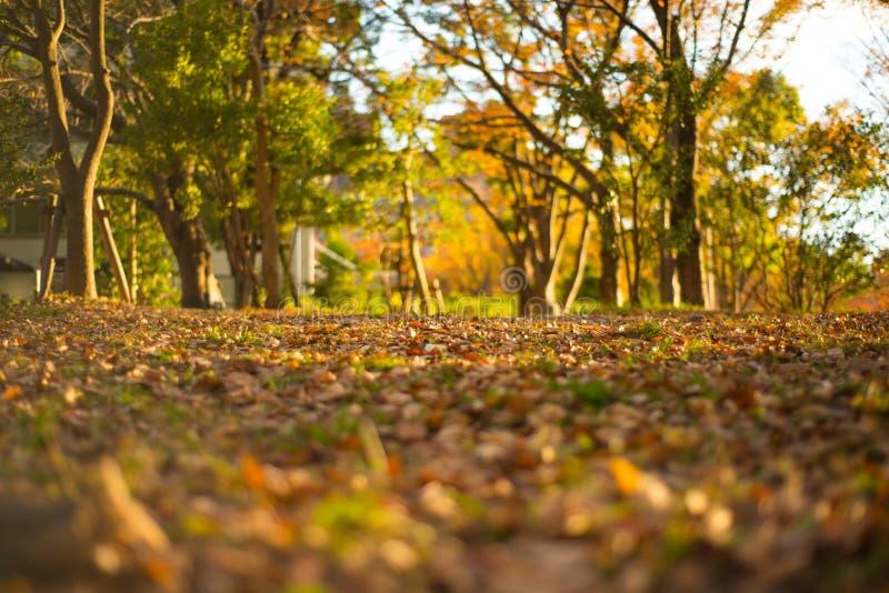在名古屋城堡庭院弄脏秋天季节和阳光的图片 免版税库存图片