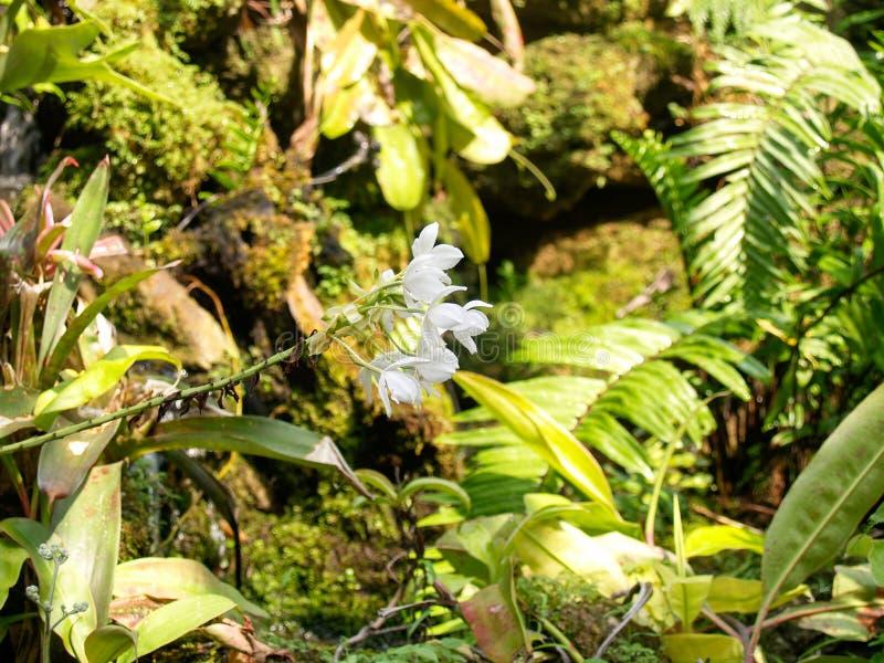 在后面的白花是遮荫的绿色庭院 图库摄影