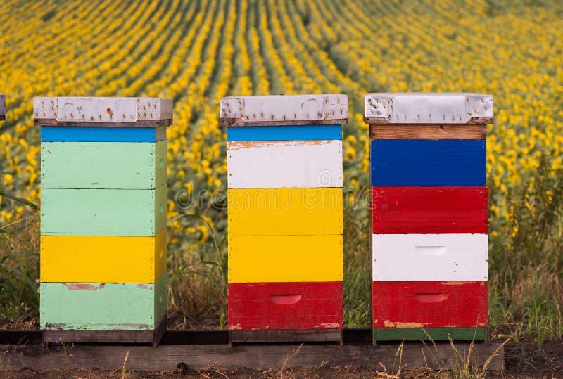 在向日葵领域的蜂箱 免版税库存照片