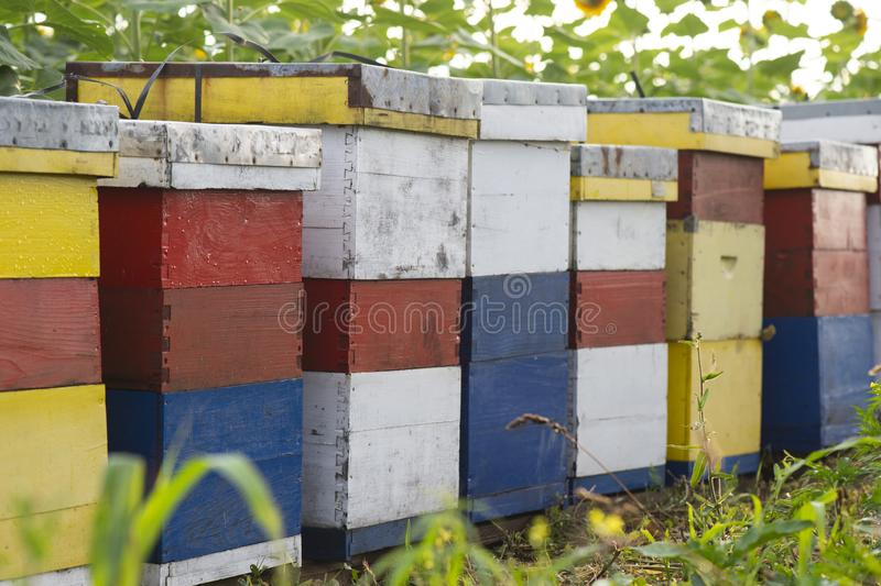 在向日葵领域的蜂箱 免版税库存图片