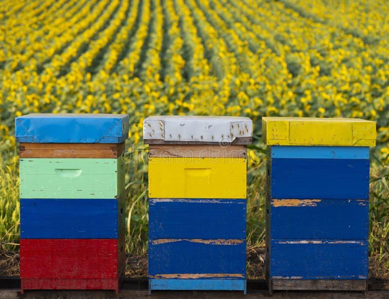 在向日葵领域的蜂箱 免版税图库摄影