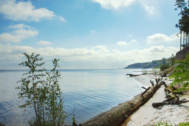在含沙岸的老死的树在湖附近 沙滩、森林、湖和云彩 免版税库存图片