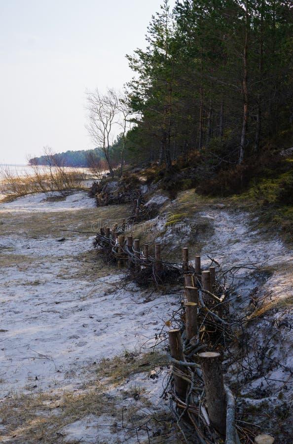 在含沙岸的藤篱芭,做加强沙丘,在里加湾,拉脱维亚 库存图片