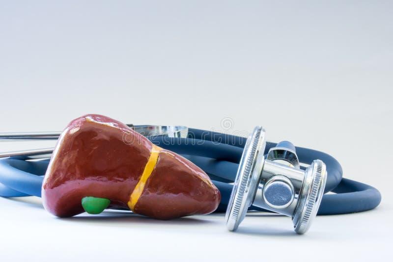 在听诊器附近的肝脏作为器官、关心、诊断、医疗测试、disea的治疗和预防健康的标志  免版税库存照片
