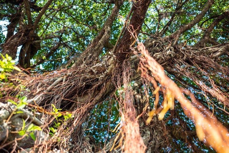 在和平Memorialpark的树在台北,台湾 免版税库存照片