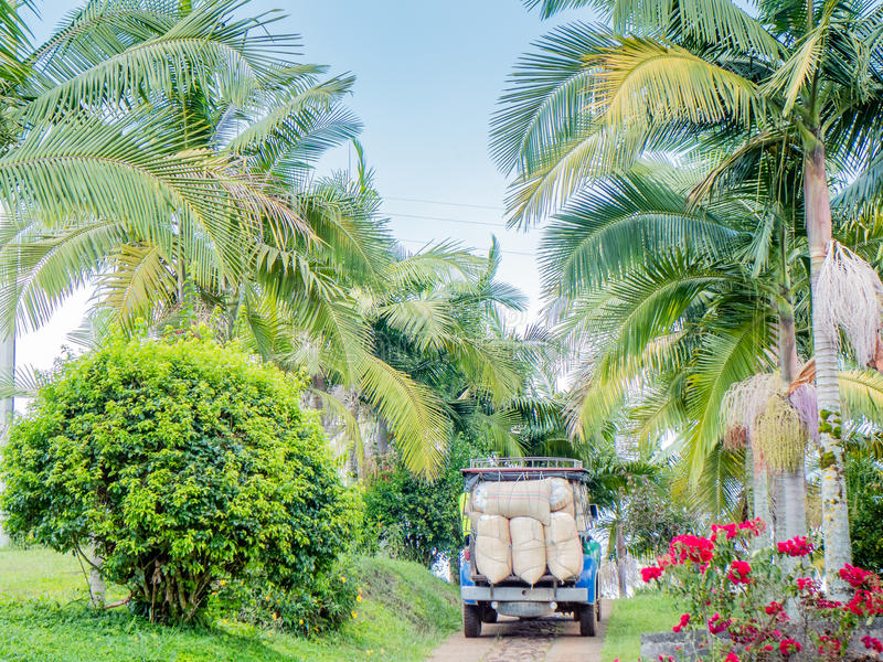 在咖啡农场的咖啡卡车在哥伦比亚 库存图片