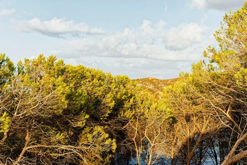 在品柱耶老岛的科斯塔Smeralda陆间海的自然 免版税库存照片
