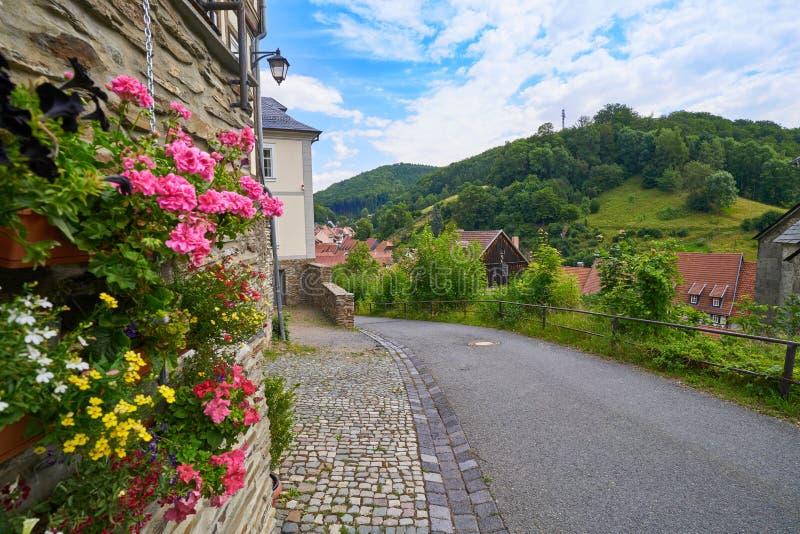 在哈茨山山德国的施托尔贝尔格花 库存图片
