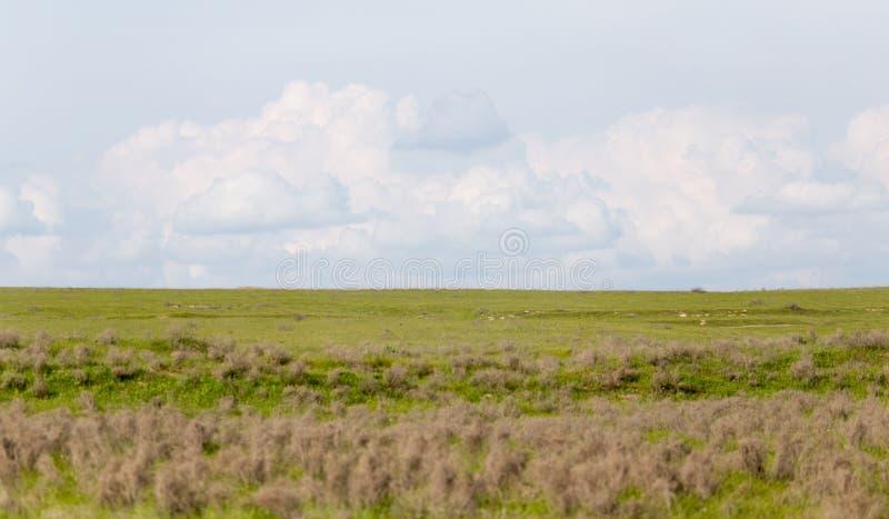 在哈萨克斯坦干草原的春天  免版税库存图片