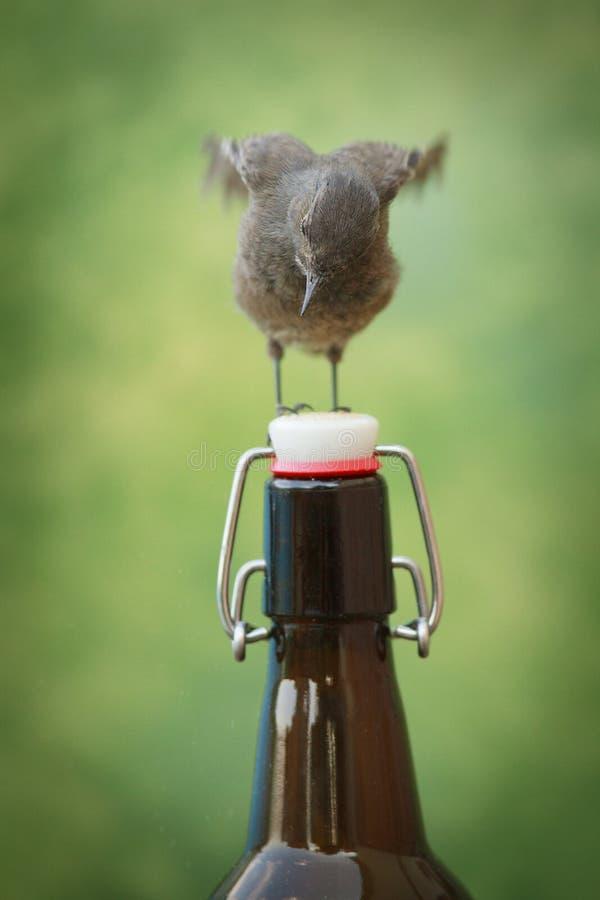 在啤酒瓶栖息的鸟 库存图片