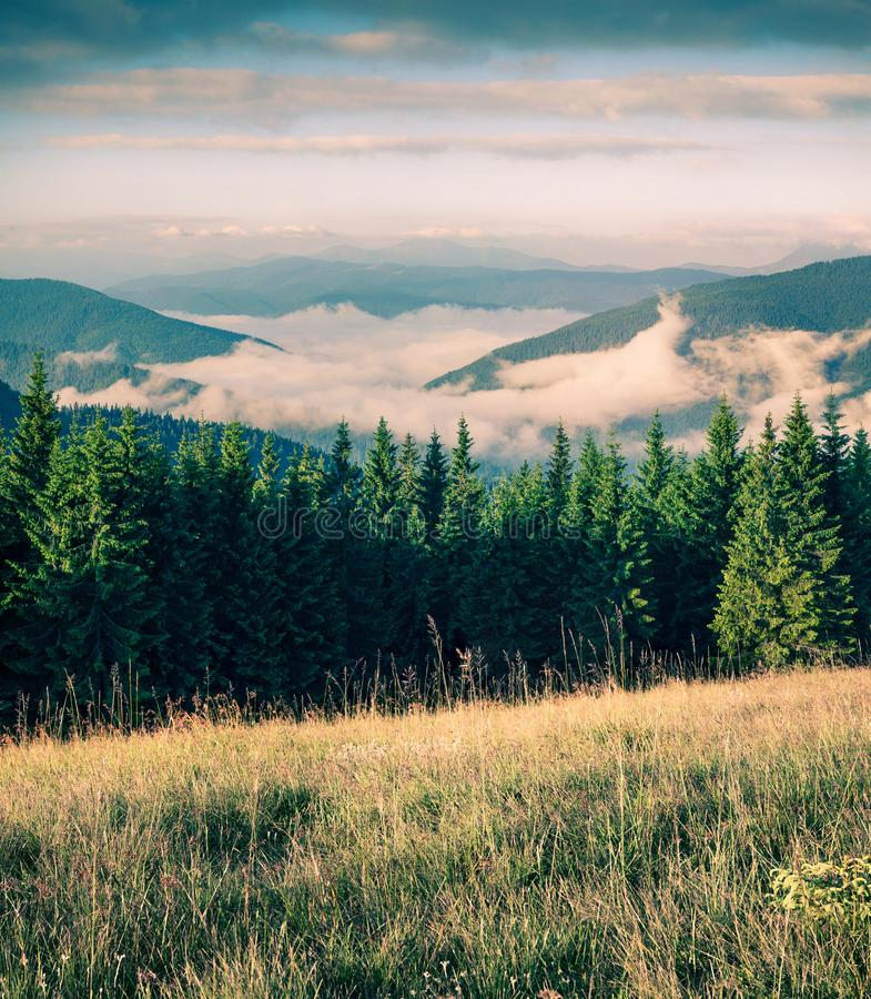 在喀尔巴阡山脉的有雾的夏天早晨 在山谷的美丽如画的室外场面在别墅6月,乌克兰,Tatariv 免版税库存照片