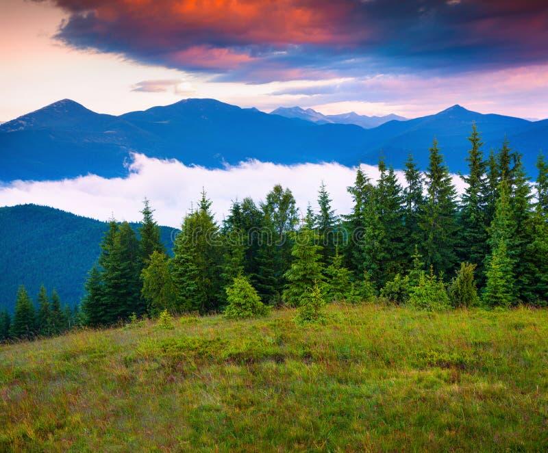 在喀尔巴阡山脉的五颜六色的夏天场面 免版税库存照片