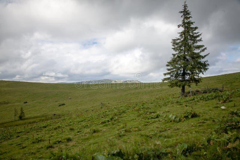 在喀尔巴阡山脉的夏日 图库摄影