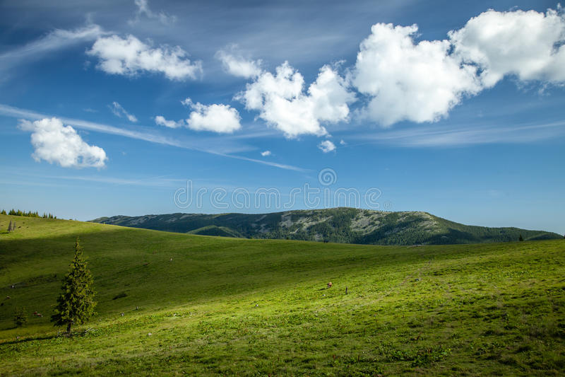 在喀尔巴阡山脉的夏日 免版税图库摄影