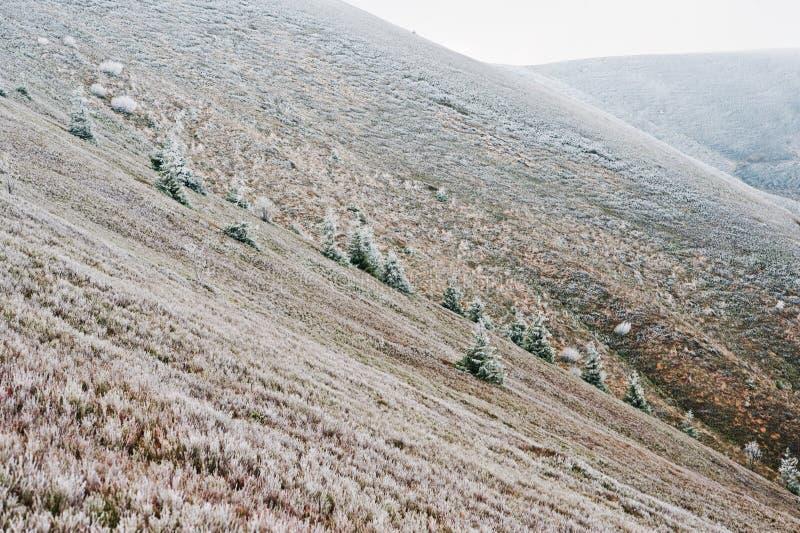 在喀尔巴阡山脉,乌克兰欧洲的弗罗斯特树 免版税库存照片