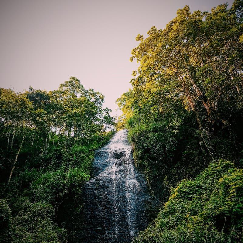 在喀拉拉的美丽的瀑布 免版税库存照片