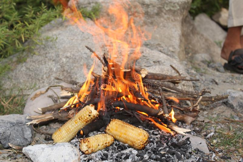 在喜马拉雅山山被烤的玉米 免版税库存图片