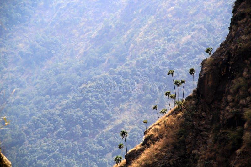 在喜马拉雅山的倾斜的棕榈树 库存照片