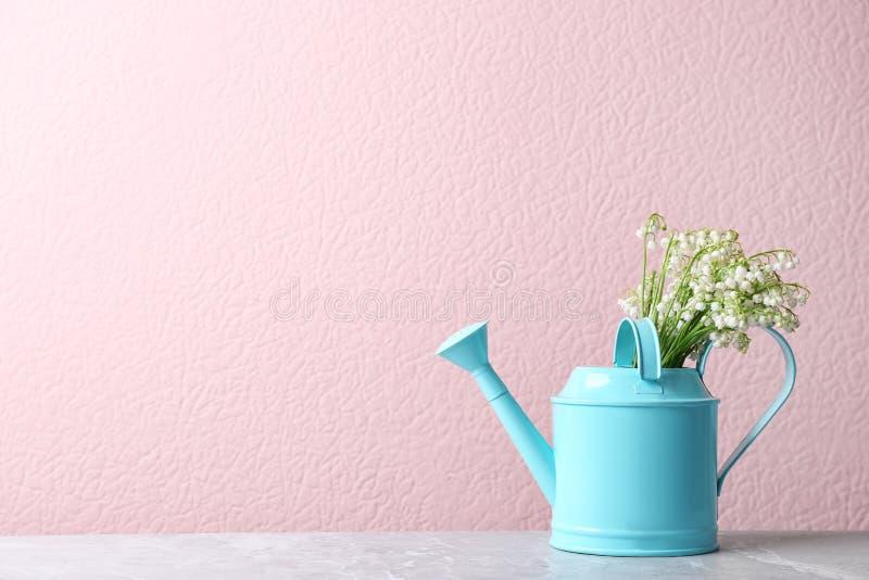 在喷壶的美丽的铃兰花束在颜色墙壁附近的桌上 免版税图库摄影
