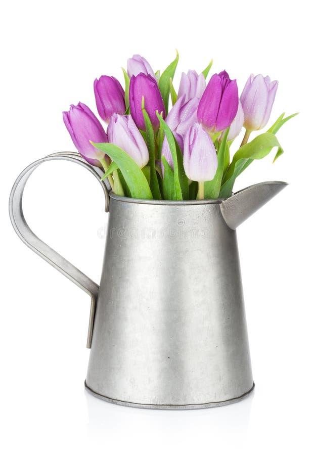 在喷壶的紫色郁金香花束 库存照片