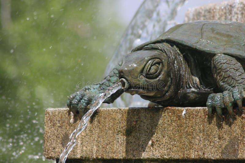 在喷泉的一只乌龟 免版税库存图片