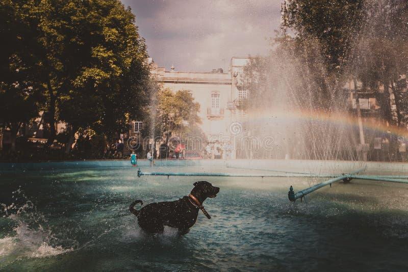 在喷泉的彩虹 库存图片