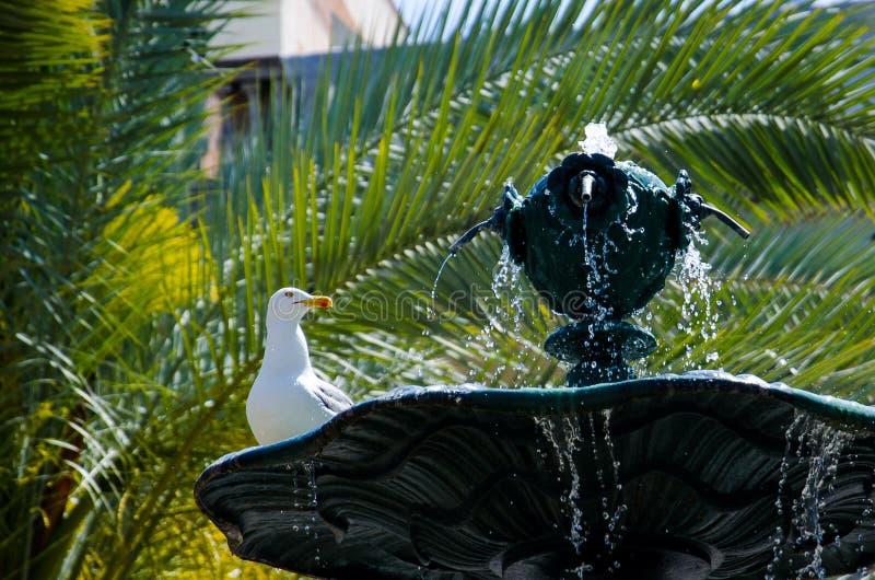 在喷泉的海鸥 库存图片